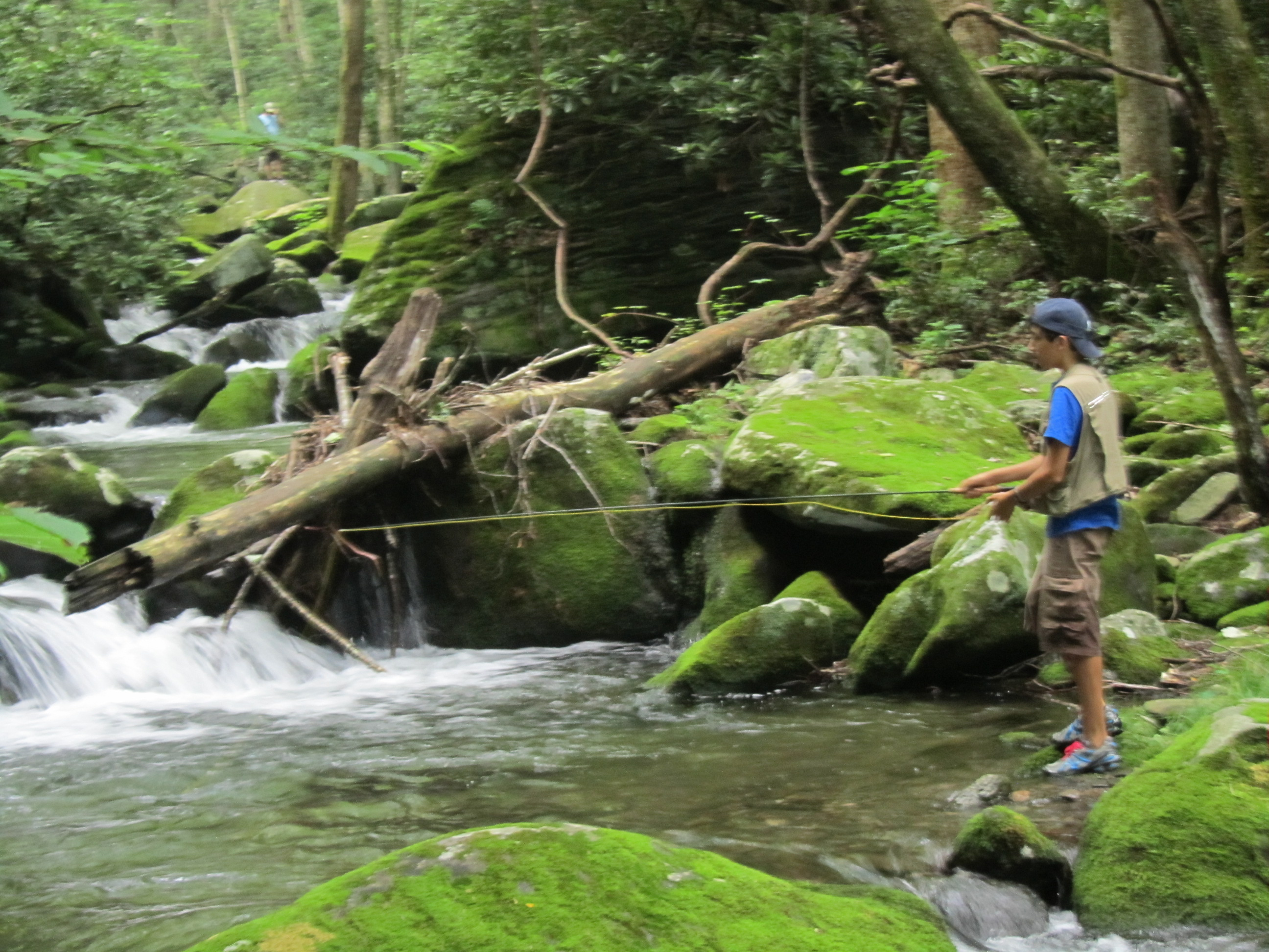 Trout unlimited great smoky mountains for Fly fishing smoky mountains