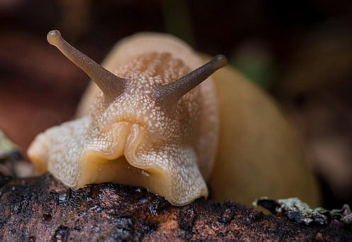 Snail by Val Weston