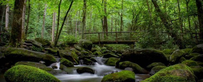 A footbridge over a stream in the Smoky Mountains