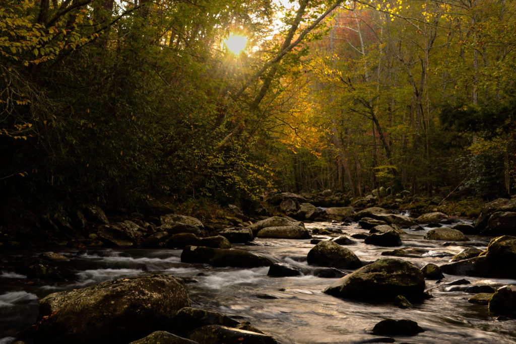 A Smoky Mountain Stream in the Fall