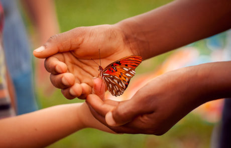 Hands gently hold a monarch butterfly