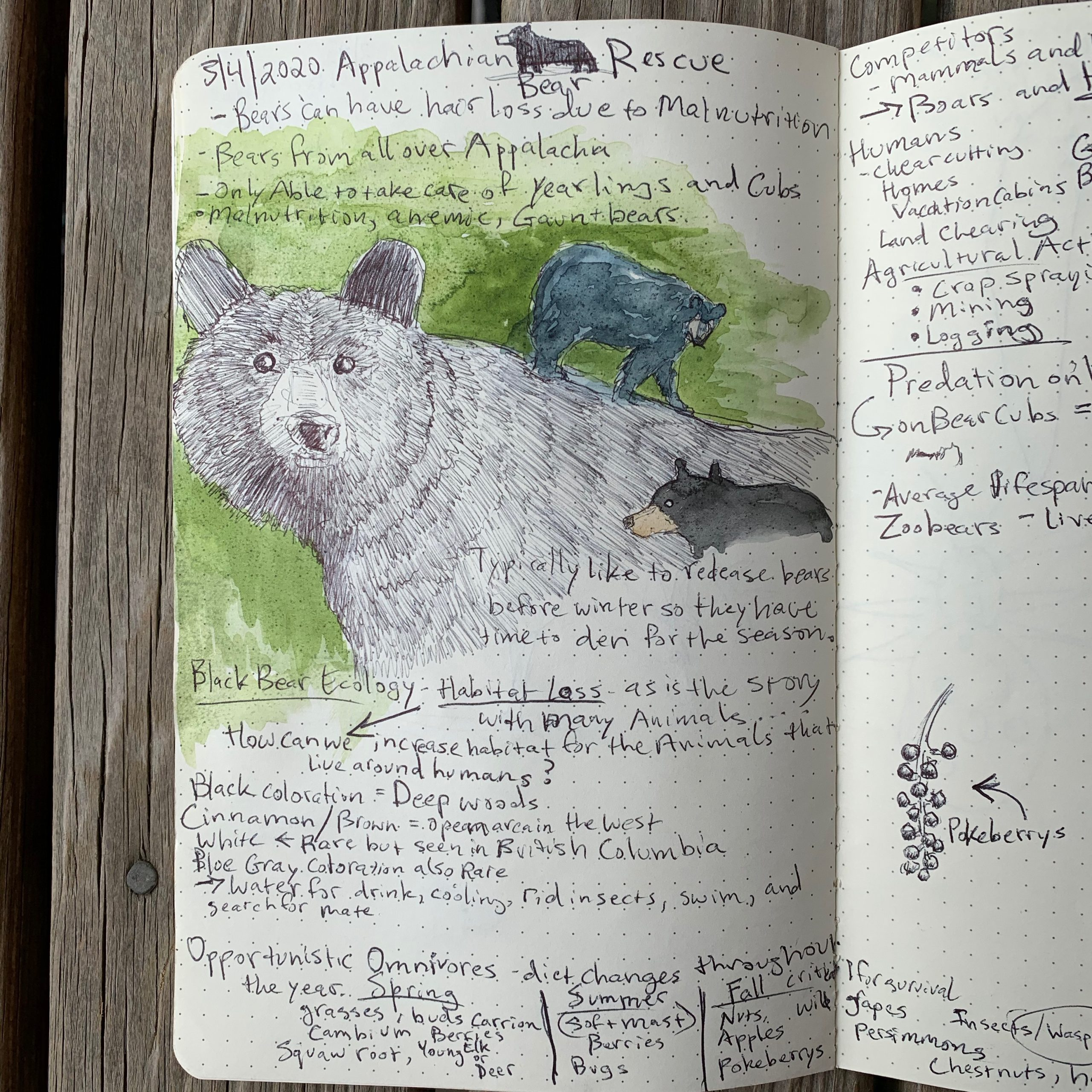 A nature journal page about Appalachian Bear Rescue
