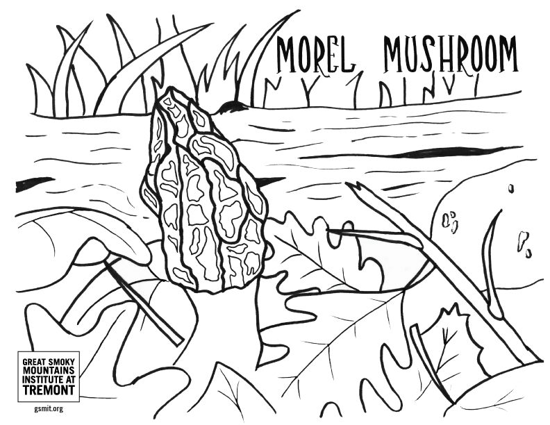 Morel Mushroom coloring page