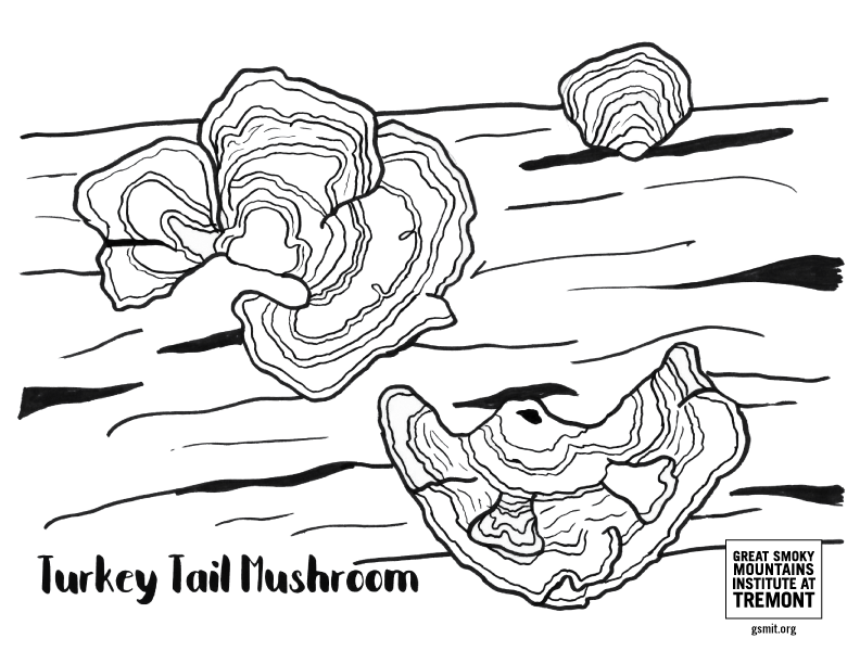 Turkey Tail Mushroom coloring page