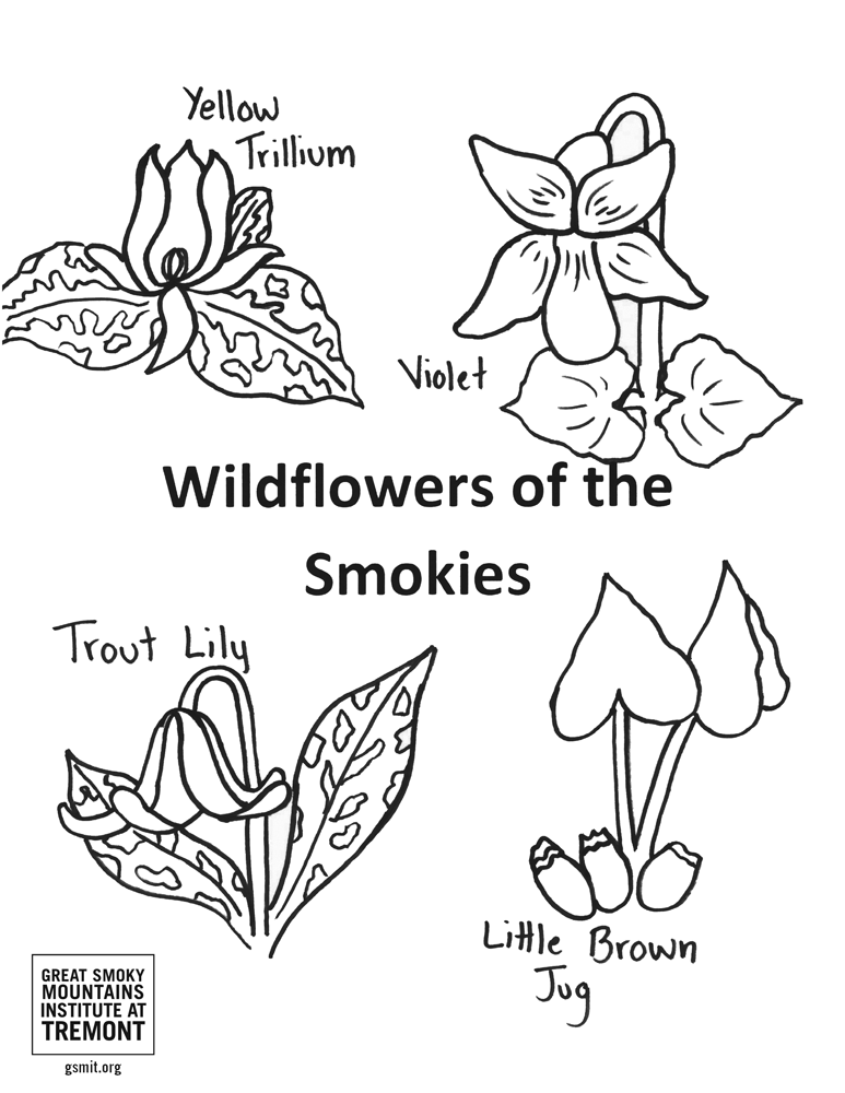 Wildflowers of the Smokies coloring page