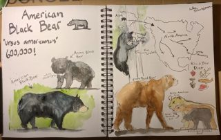 Learn more about the American black bear during this nature journaling video.