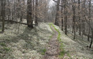 A trail meanders through the woods