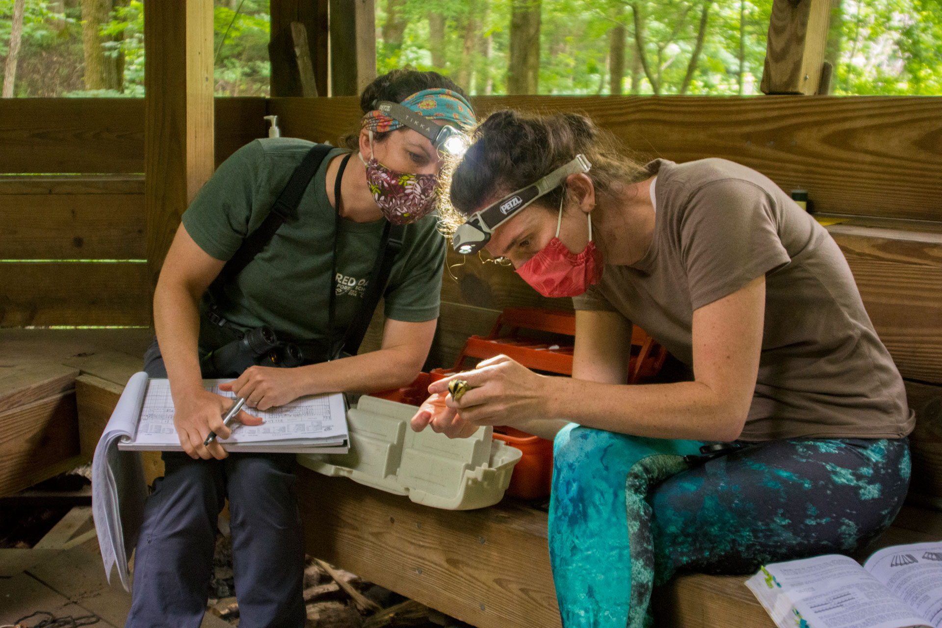 Community Science volunteer Clare assists Tremont's Manager of Science Literacy in collecting data on a Worm-eating Warbler during the 2020 bird banding season