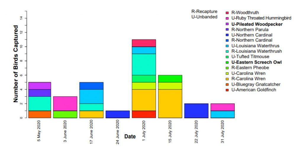 Figure 2. A colorful graph shows all the unbanded or recaptured birds during Tremont's 2020 community science bird banding season