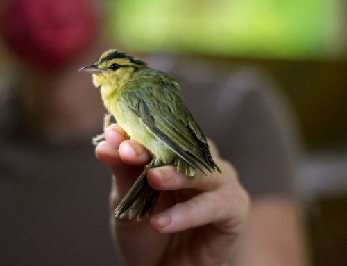 2020 Bird Banding Report