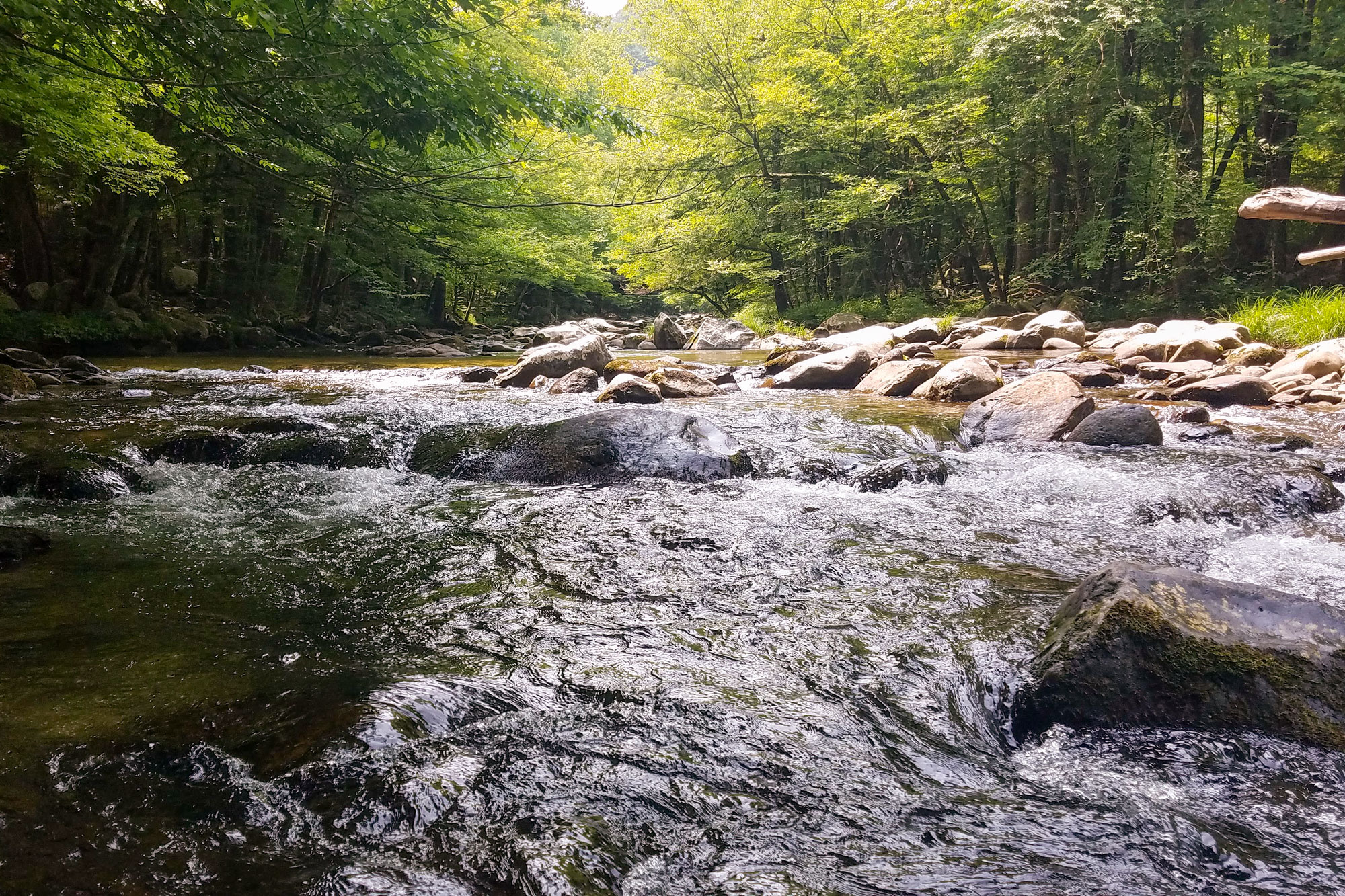 The Middle Prong of Little River
