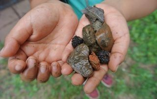 Student's hands hold rocks and berries collected in the schoolyard