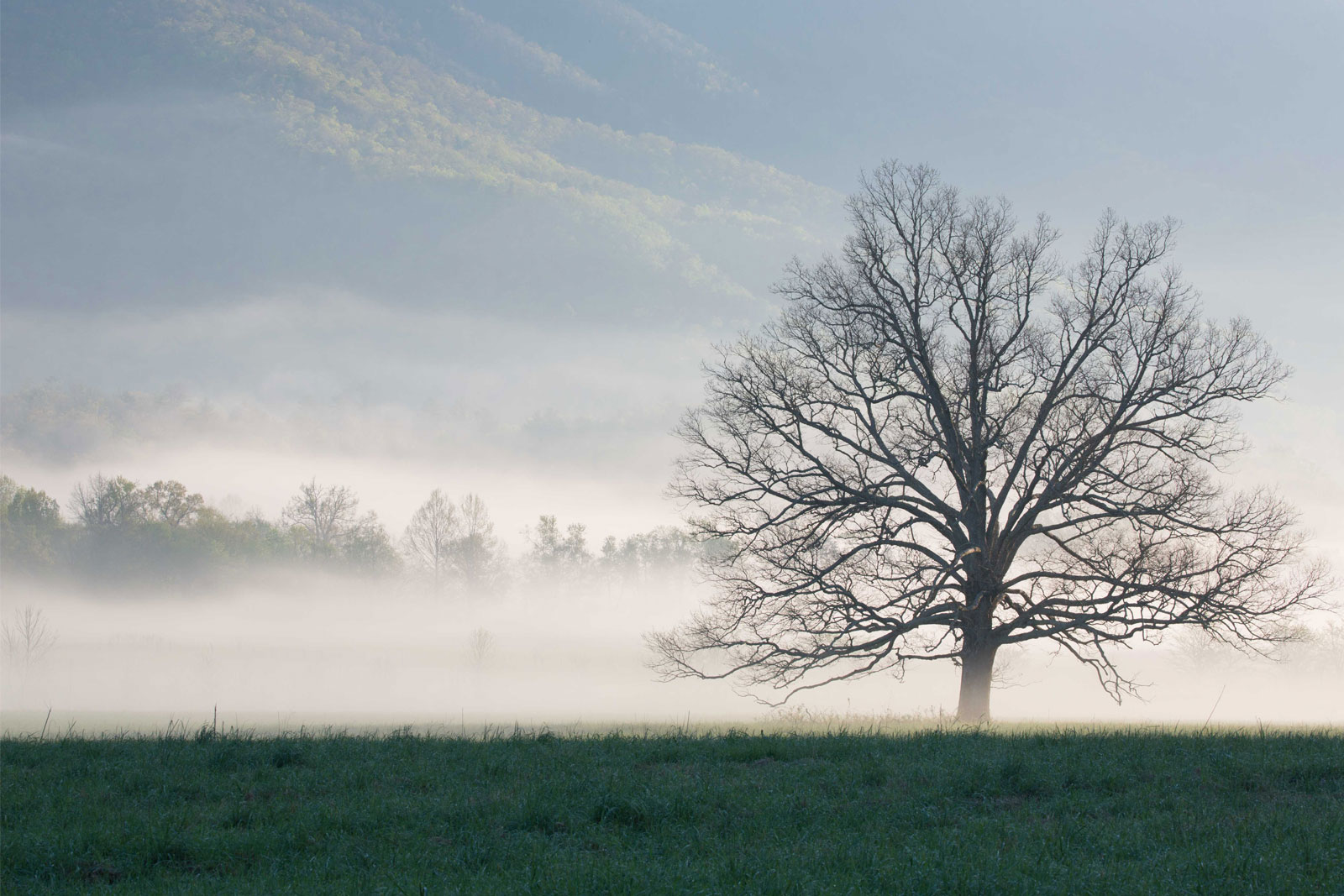 A tree surrounded by early morning fog in Cades Cove