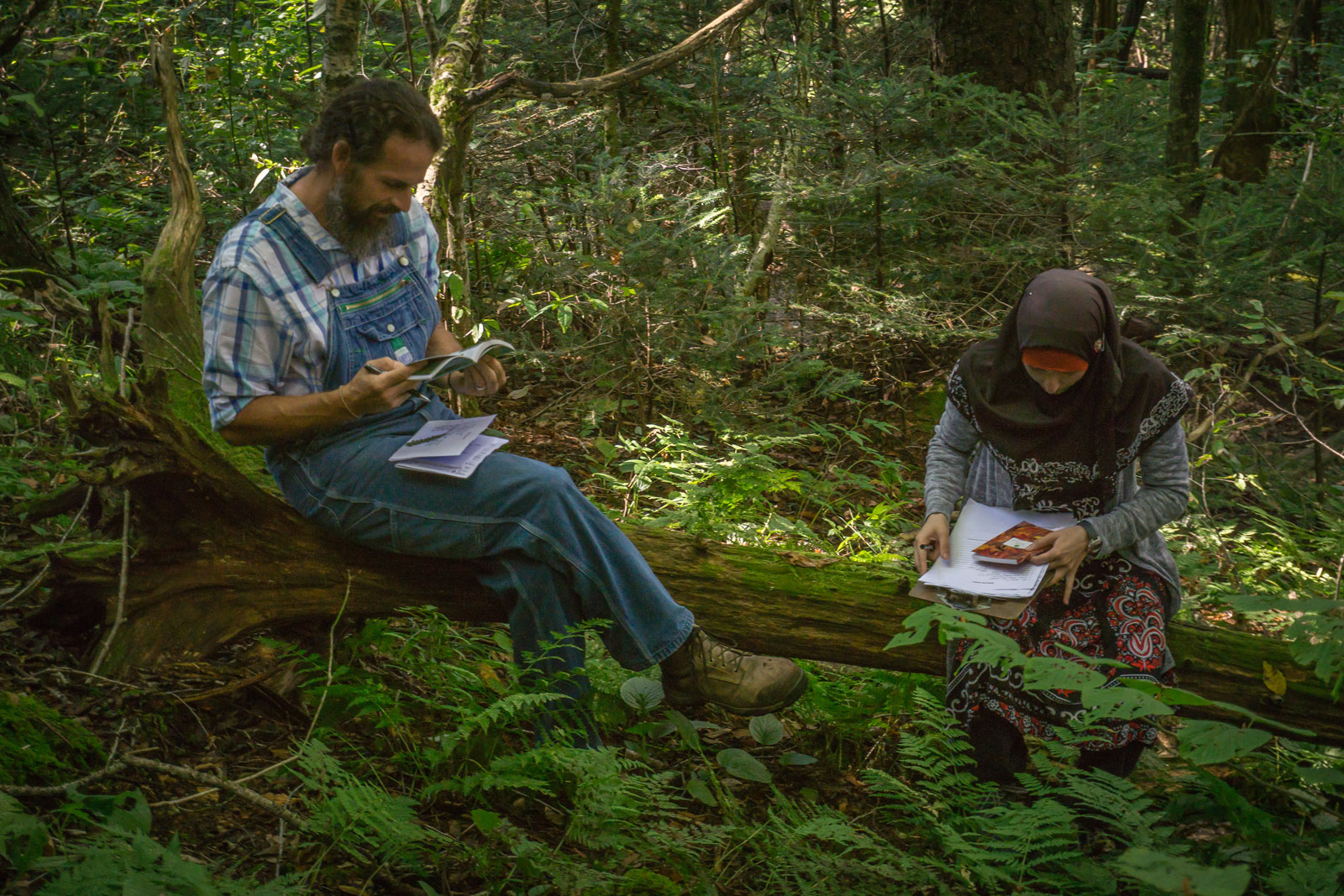 Students in the naturalist program study in the Smokies