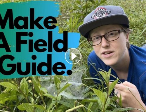 Weekly Wonder Season 1, Episode 2: Make a Field Guide