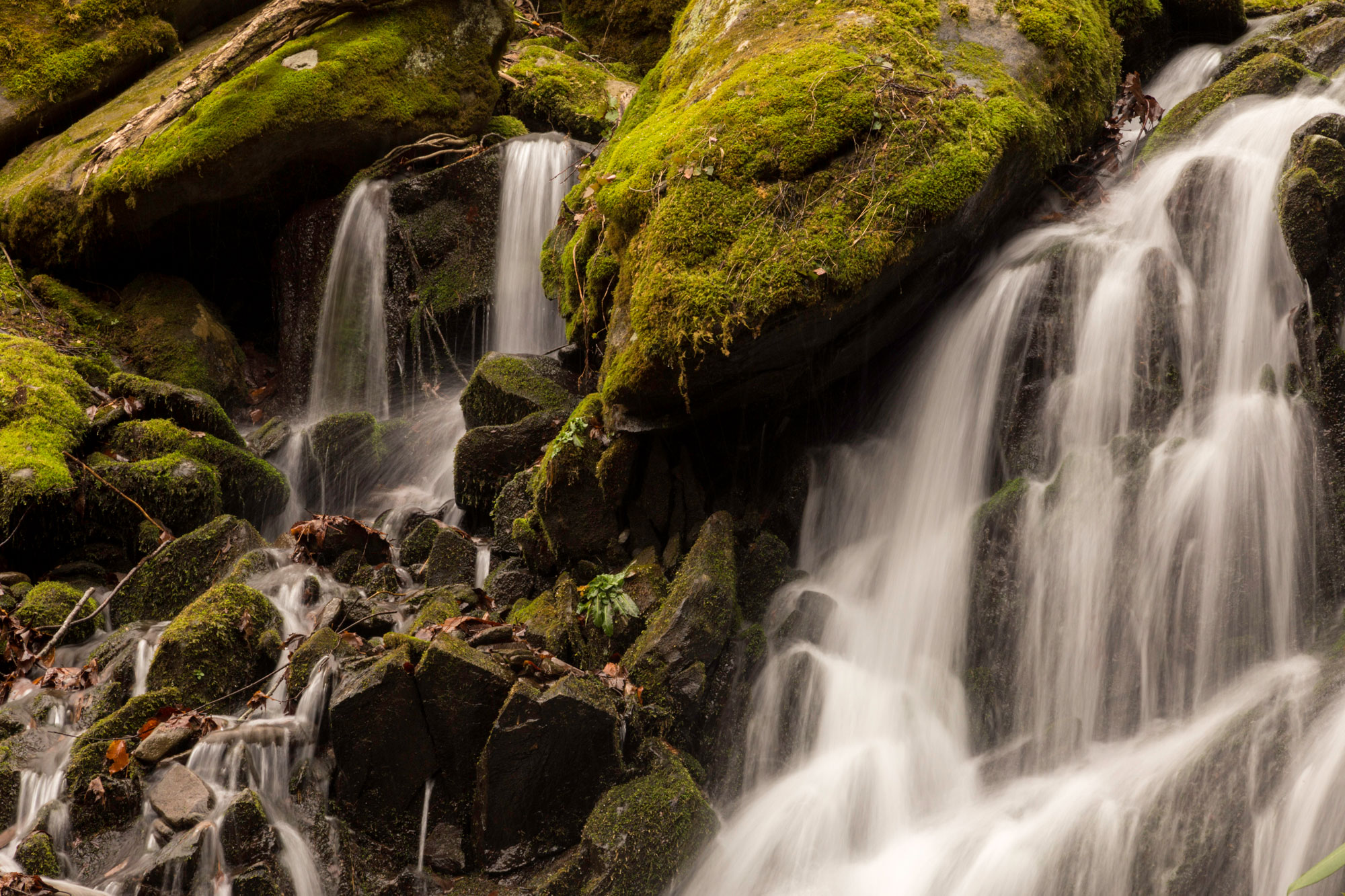 Flowing water in the Smokies. Photo by Ken Thompson.