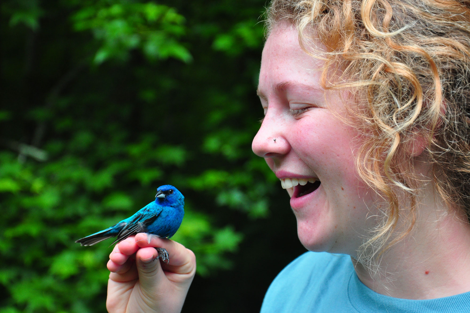 A female holds a bird during bird banding at Tremont Institute