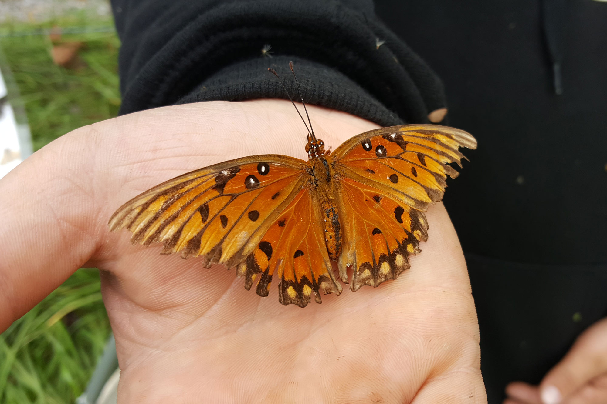 A butterfly rests on a volunteer's hand