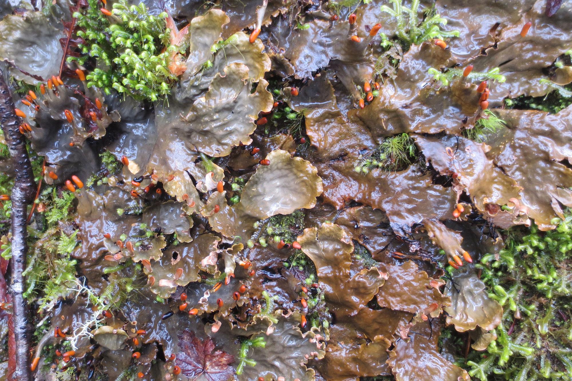 Close-up photograph of lichen