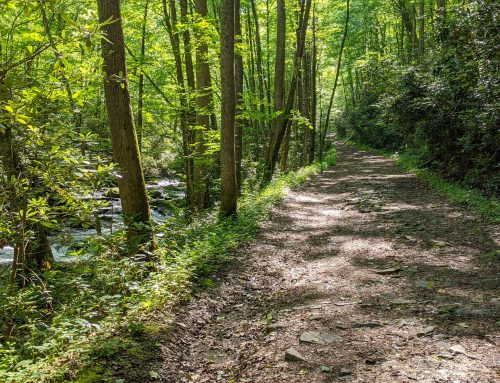 Middle Prong Trail: A Walk Through Time