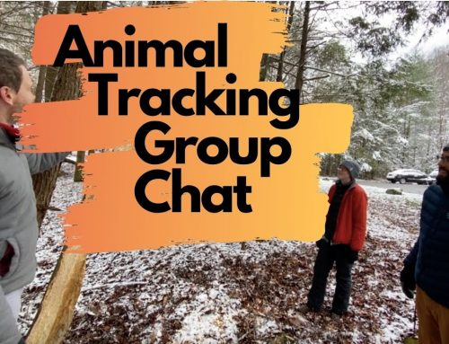 Weekly Wonder Season 1, Episode 8: Animal Tracking Group Chat