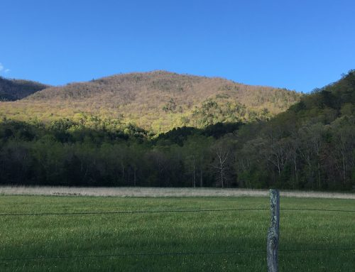 Hidden in the Green: The Geologic Story of the Smokies