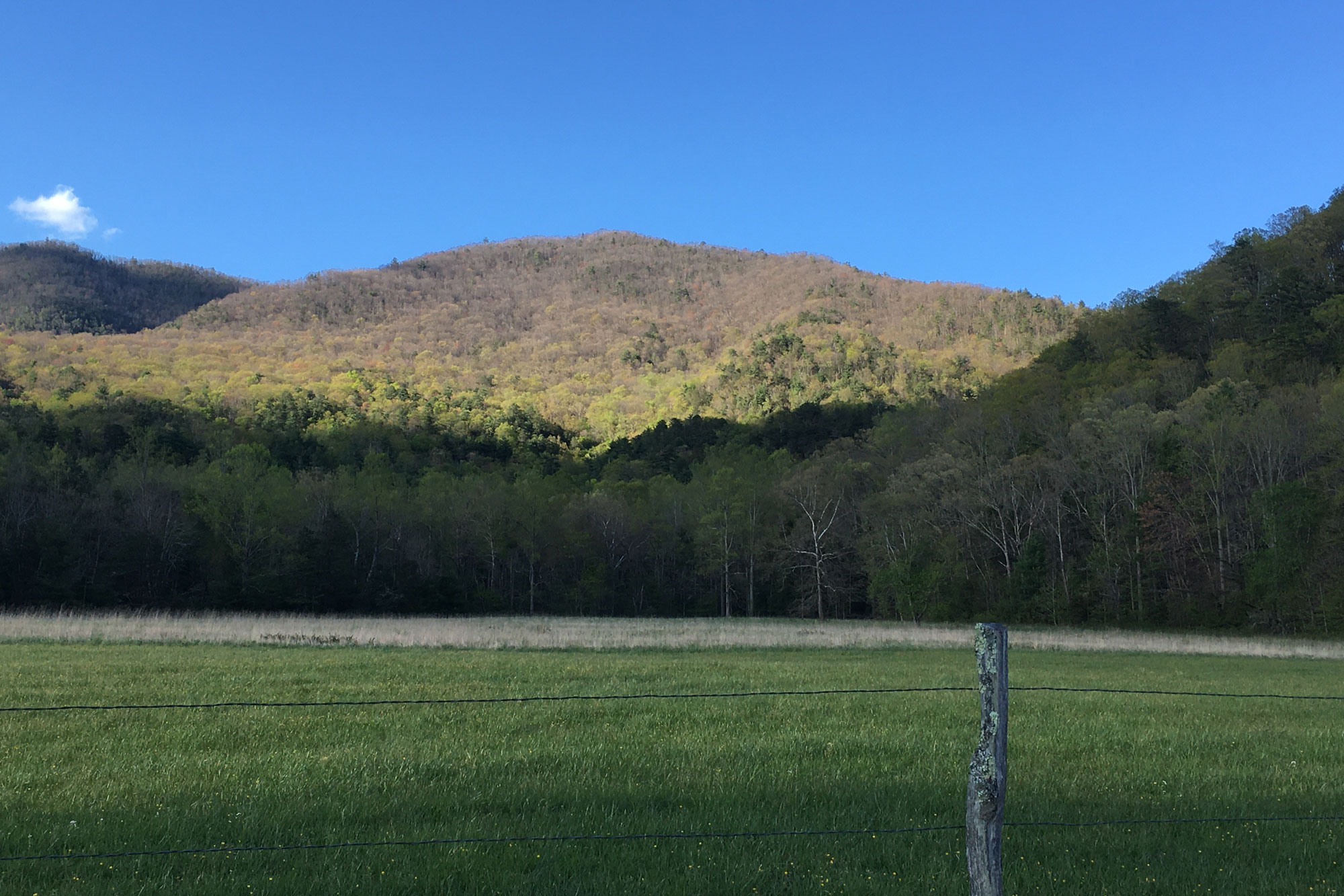 Spring makes its way up a mountain in Cades Cove