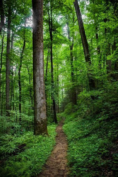 A hiking trail in the Smoky Mountains. Photo by Krisi Parsons.