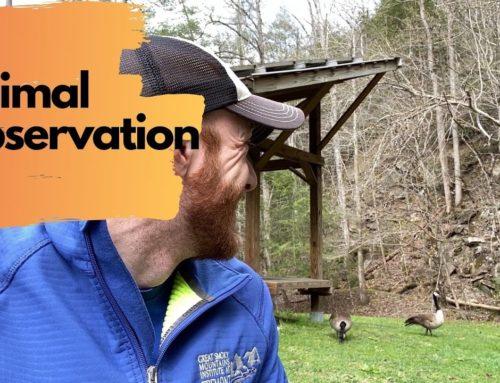 Weekly Wonder Season 2, Episode 3: Animal Observation