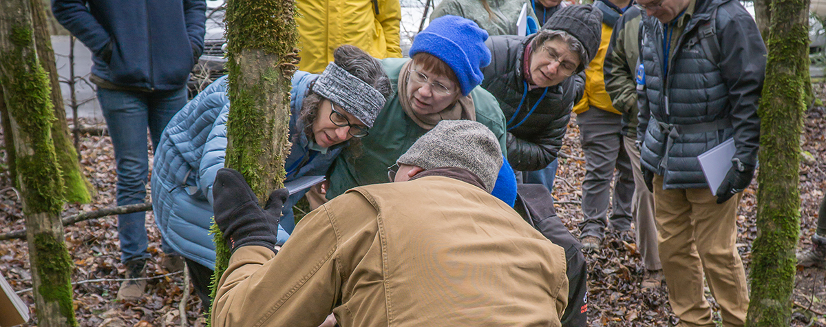 Four people leaning over looking closely at moss on a tree to practice their naturalist skills.